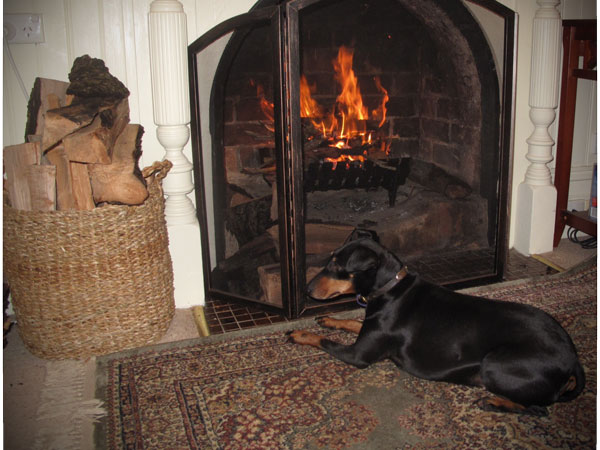 Log fire and resting dog